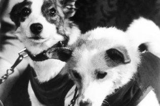 """50 лет назад """"звездные собаки"""" Белка и Стрелка отправились в космос"""