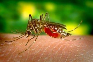 У Греції спалах рідкісного вірусу Західного Нілу - десятки хворих