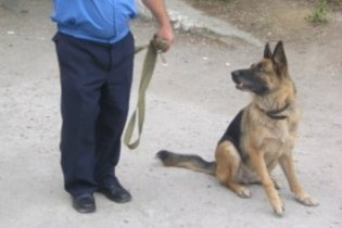 Впервые в истории Украины нагрудным знаком МВД наградили собаку