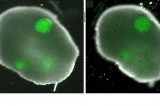 Создан первый в мире искусственный яичник