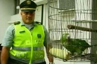 Колумбийская полиция арестовала попугая, помогавшего местным наркобаронам