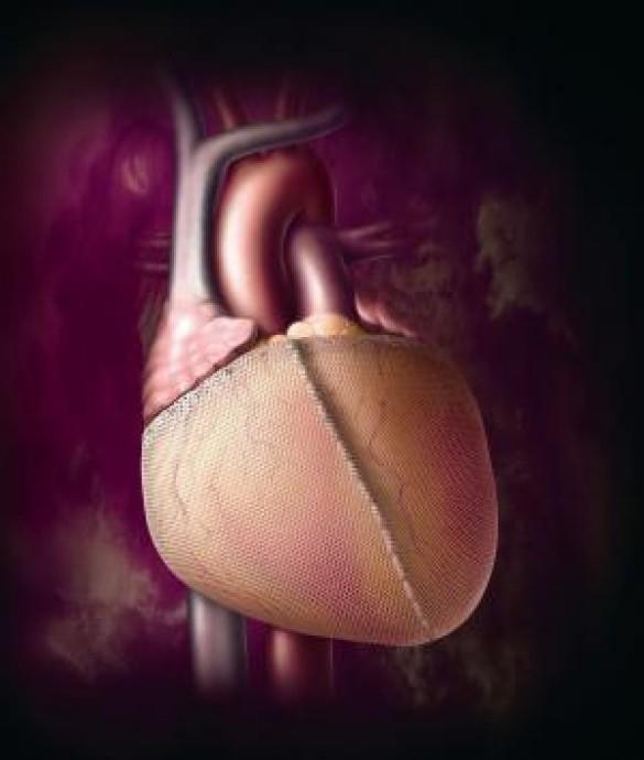 Серце людини (Фото: science.compulenta.ru)