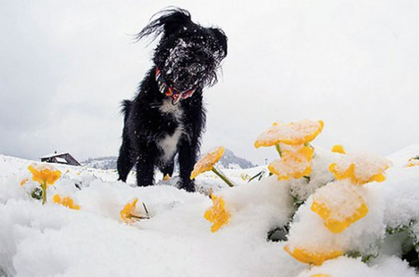 Сніг у Австрії_6