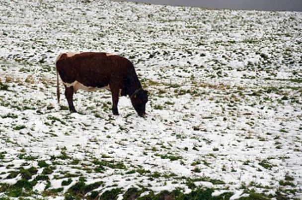 Сніг у Австрії_7