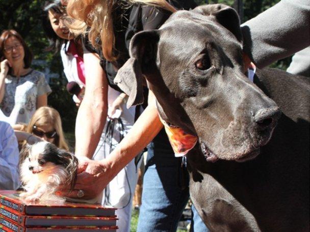 Найбільший і найменший собака світу зустрілися в Нью-Йорку