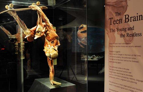 виставка Body Worlds_10