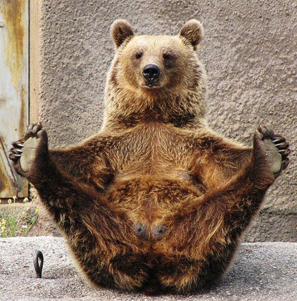 Ведмедиця-йог Сантра_2