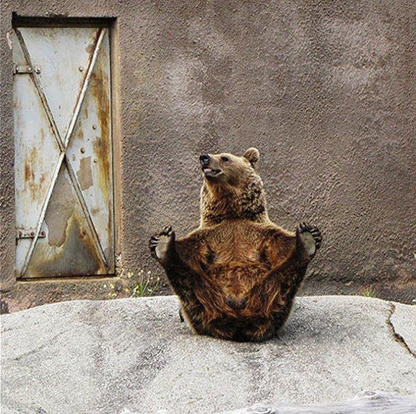 Ведмедиця-йог Сантра_3