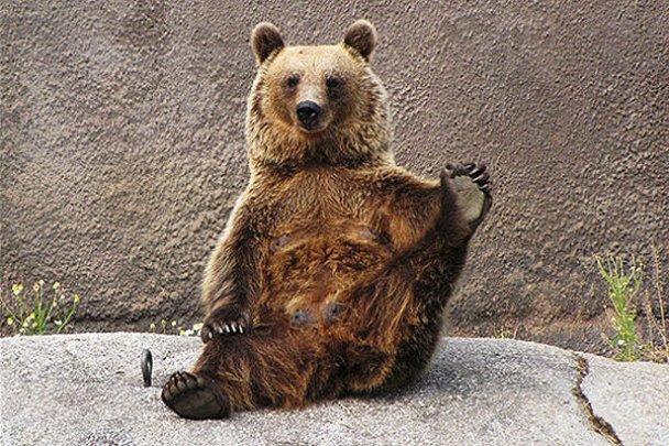 Ведмедиця-йог Сантра_4