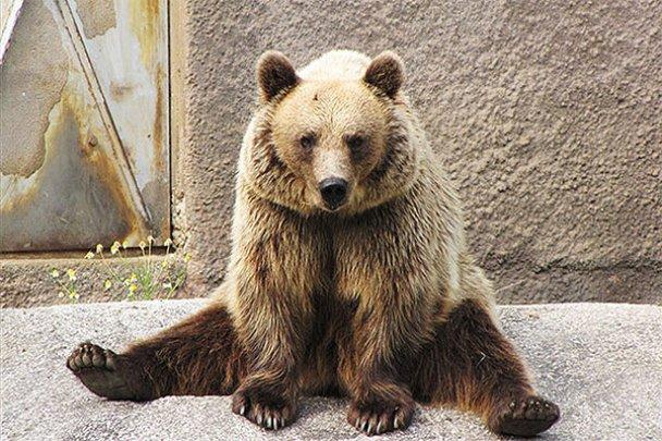 Ведмедиця-йог Сантра_8