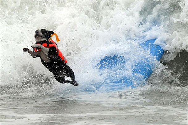 Чемпіонат з собачого серфінгу_2