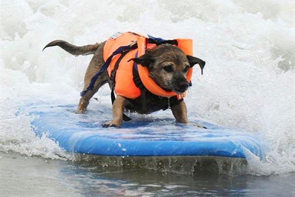 Чемпіонат з собачого серфінгу_3