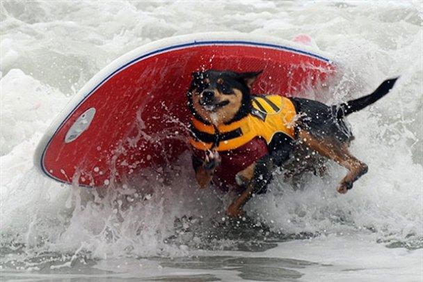 Чемпіонат з собачого серфінгу_10