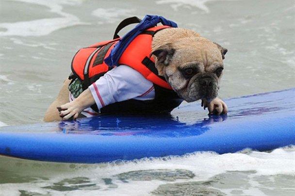Чемпіонат з собачого серфінгу_12