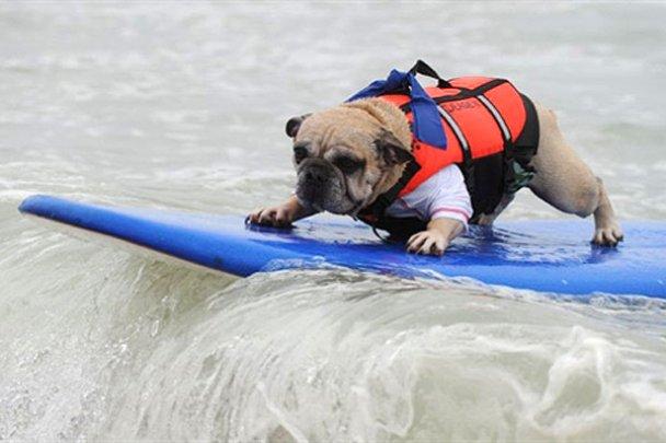 Чемпіонат з собачого серфінгу_13