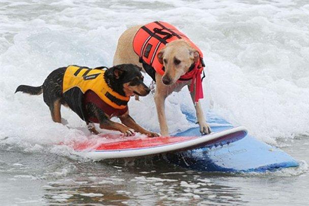 Чемпіонат з собачого серфінгу_17