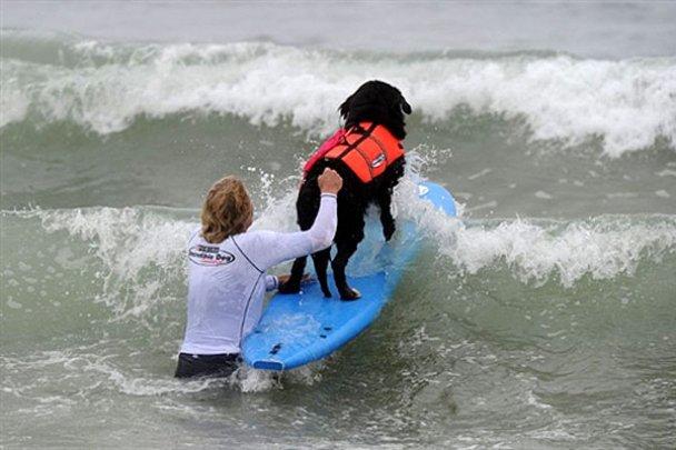 Чемпіонат з собачого серфінгу_18