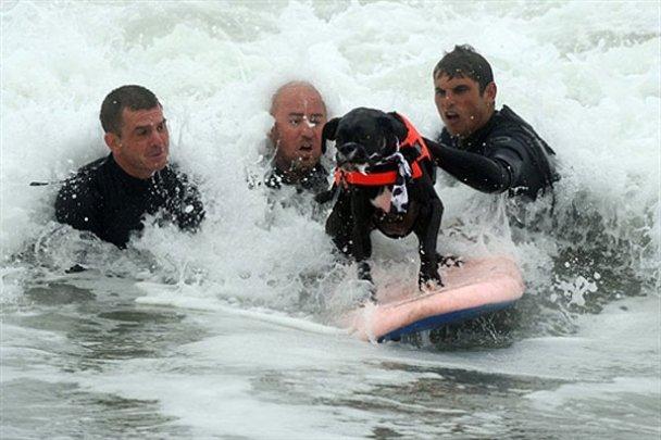 Чемпіонат з собачого серфінгу_19