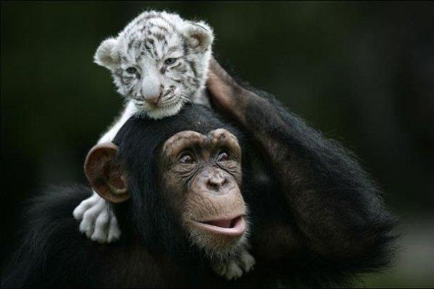 Всиновлення у світі тварин_32