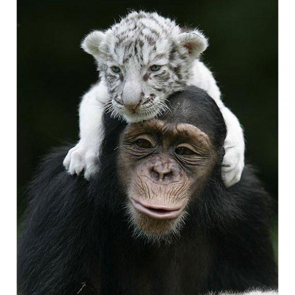 Всиновлення у світі тварин_33