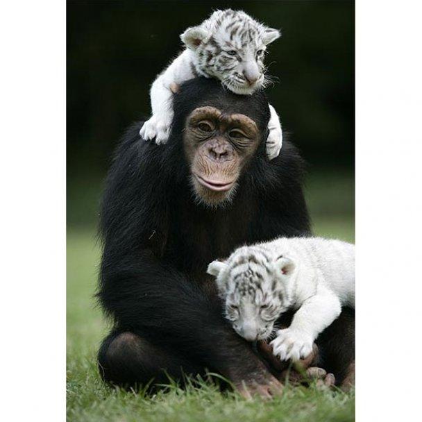 Всиновлення у світі тварин_35