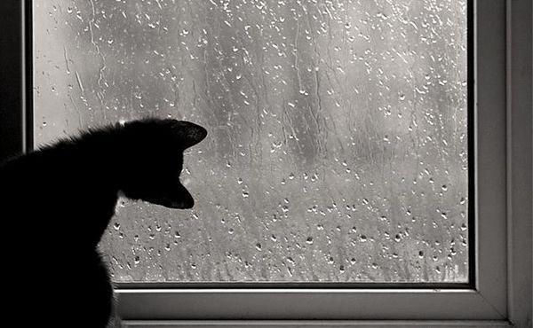 В киеве облачно с прояснениями дождь