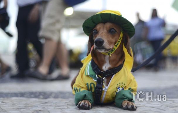 Собаки-фанати_8