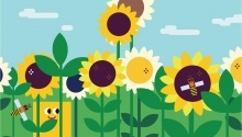 Про квітку-сонце та її чари
