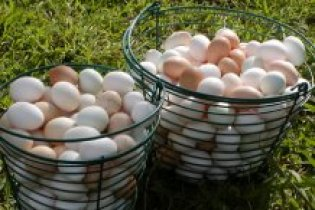 До конца года одно яйцо будет стоить 3 гривны