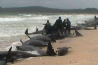 На берег Новой Зеландии выбросились 73 черных дельфина