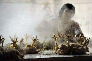 Французькі винищувачі знищили 5 тисяч курей