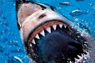 У Єгипті турист випадково вбив акулу-людожерку, придавивши її своїм задом