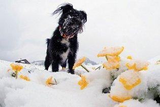 Перший сніг випав у Німеччині