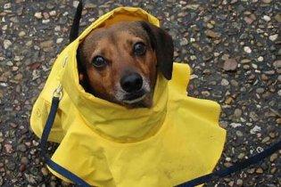 П'яним москвичам заборонять вигулювати собак