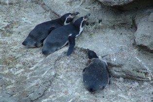 В Киевском зоопарке из-за недостатка пищи умерли три пингвина