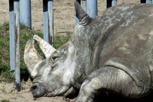Из Киевского зоопарка исчезла половина животных