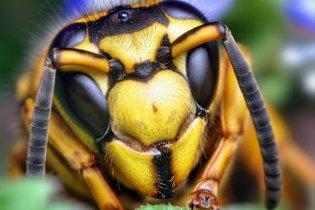 На Кировоградщине дикие осы атаковали школьников