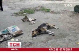 У Києві знову труять собак