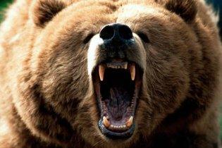 В России бешеный медведь чуть не загрыз женщину