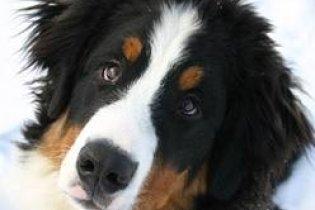 Знахар відрізав вуха собаці, щоб вилікувати дитину від переляку