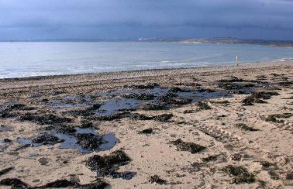 Забруднення моря мазутом
