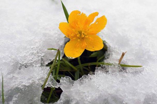 В Польше и Австрии выпал первый снег