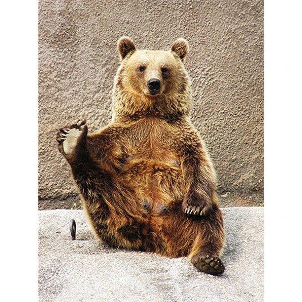 В Финляндии медведица начала заниматься йогой