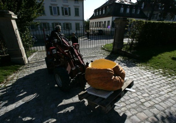 В Германии состоялась тыквенная регата