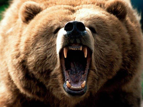 У Росії голодний ведмідь покусав перехожого в центрі міста і втік