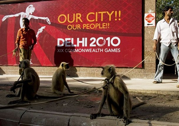 На Іграх Співдружності спортсменів охоронятимуть мавпи